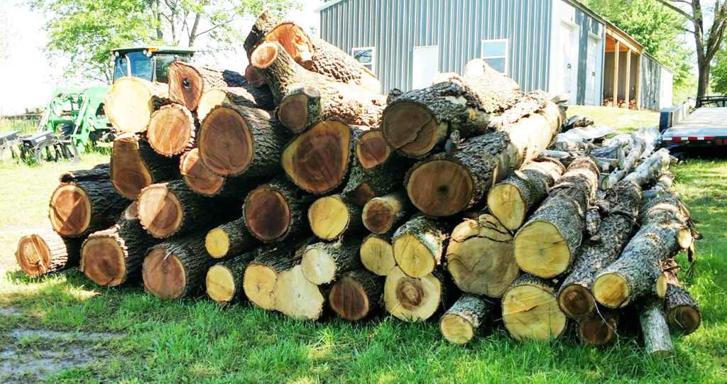 Got logs? Bob does. He gets them from farmers, loggers, and folks who have no use for them.